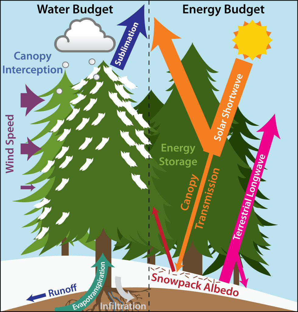 Forest Water And Energy Budget Processes