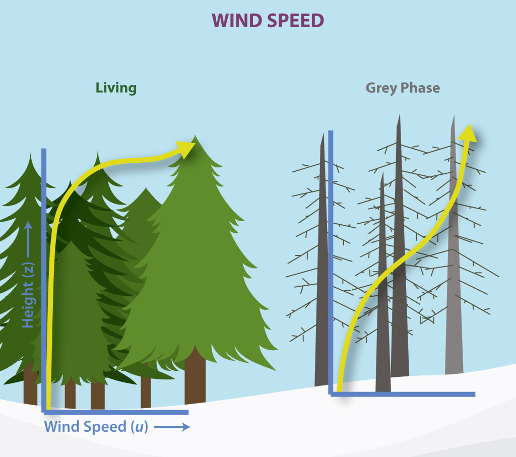 Forest Wind Speed